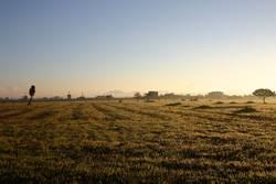 sonnenmorgen