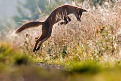 Springen am Morgen