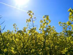 Blumen im Sonnenschein