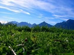 Im Gras
