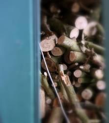 Holz für die nächsten 50 Jahre...