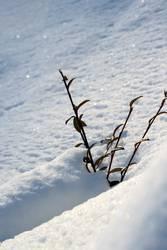 Schneebad gefällig - bei diesem schönen Wetter?