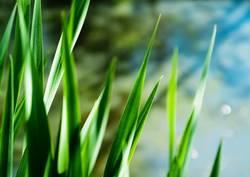 Graswelten