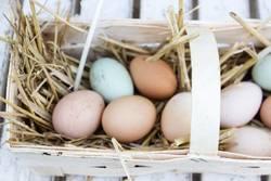 gefundene Eier