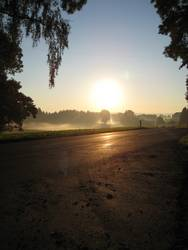 Morgendliches Nebelmeer II
