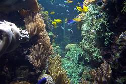 Unterwasser Welten