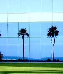 glass-palms