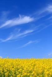 Blau/gelbe Symphonie