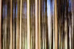 Wald in Bewegung