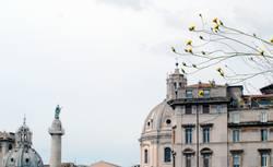 ROMA - Rooftops, Blümchen & Statuen