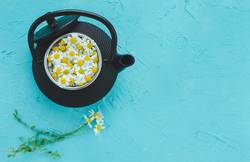Fresh camomile flowers in teapot on blue background.