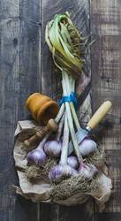Bunch of garlic with kitchenware on wooden background