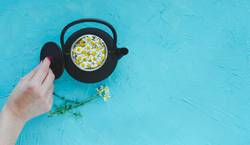 Fresh camomile flowers in teapot on blue background