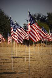 American flags | luftig