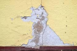 Hundchen an der Wand