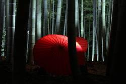 Bambuswald mit Papier-Schirm, Japan