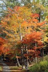 Herbst in Japan – Baum mit Blattfärbung