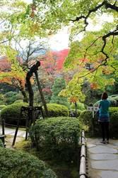 Japanischer Zen-Garten im Herbst, Nikko