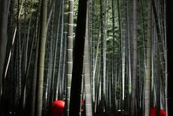 Bambushain mit Schirmen und Beleuchtung, Japan