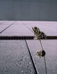 GROW! | pflanze trist einsam stadt alleine single kraft hoffnung