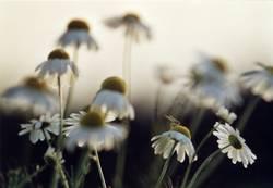 Blumenwiese 4