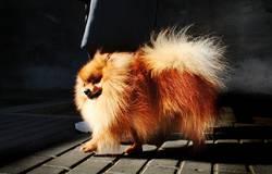 dog street fotographer