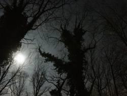 moon light @ cemetary
