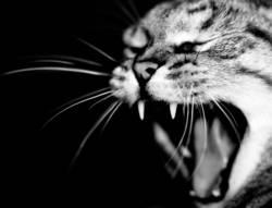Grisu the cat