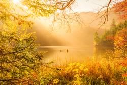 Sun rays and autumn nature