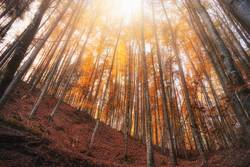 Autumn deciduous forest with orange foliage on sunny day