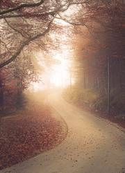 Curved alley in foggy autumn woodland