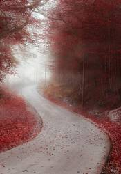 Alley through misty forest in autumn colors