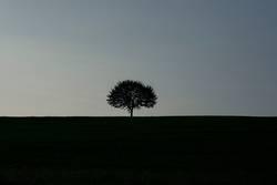 Single tree silhouette at sunrise