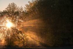 Sun rays shining through fog and trees