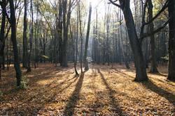 Laubwald im Licht