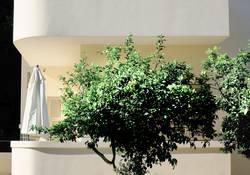Balkon mit grün