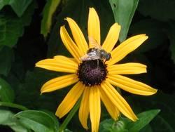 Blume & Biene