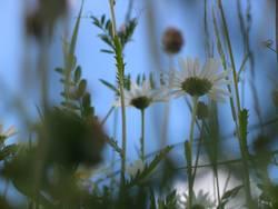 sag mir wo die Blumen sind...