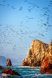 Vögel füllen den Himmel im Nationalpark Paracas, Pisco Peru