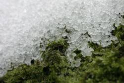 schnee auf moos