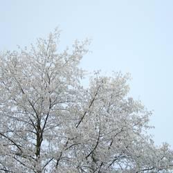 Willkommen, Winter II