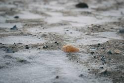 Muschel im Sand mit Schnee