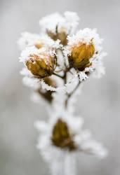 Snowflower