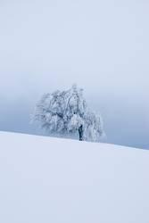 Wintertree - verschneiter Baum auf dem Schauinsland