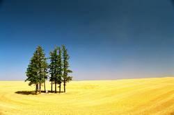 Feld, Wald und Himmel