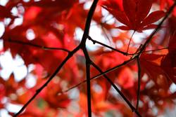 Herbst/rot