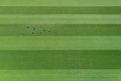 Tauben auf dem Sportplatz.