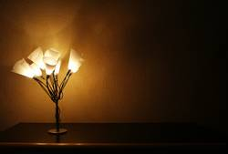 Ein Strauß warmes Licht