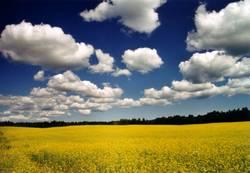 Schwedische Landwirtschaft