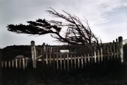 Windschief